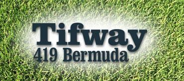 Tifway 419