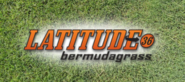 Latitude 36™ Bermudagrass