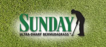 Sunday™ Ultra-Dwarf Bermudagrass
